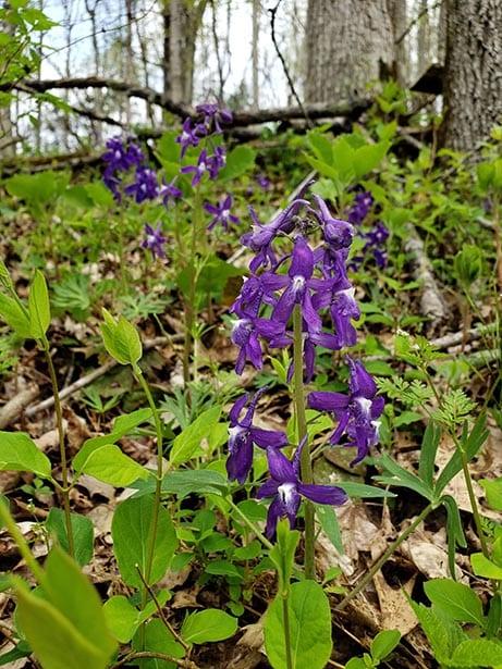 Violet flower bloom