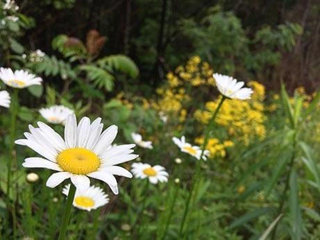 Flower bloom in Broad Run Park