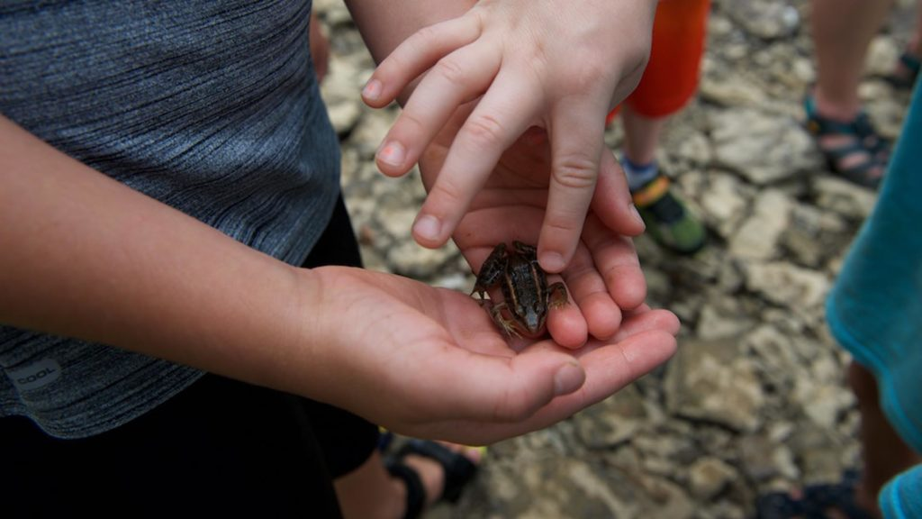 Children hold a frog