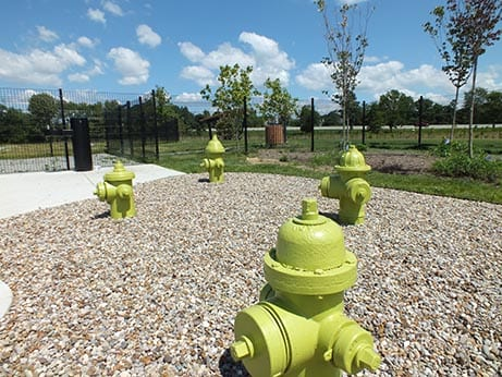 Four yellow fire hydrants