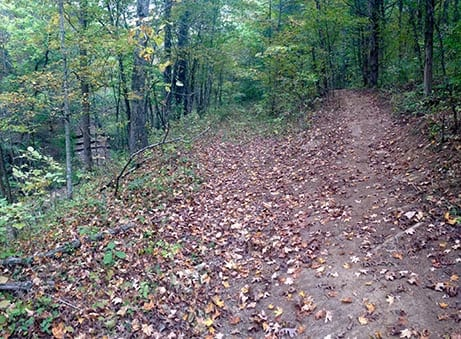 Leaves on a trail