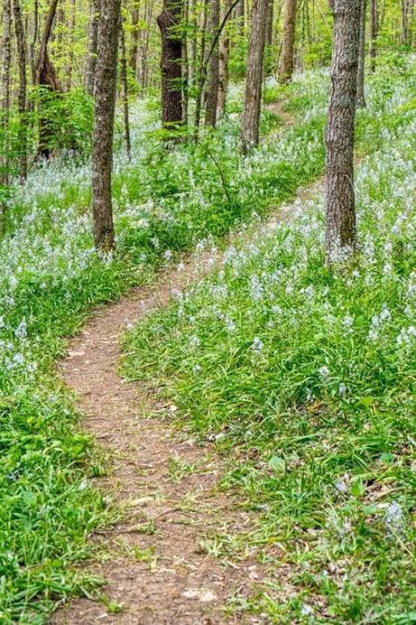 Hyacinth Trail