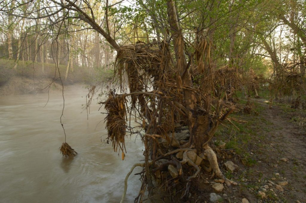 Tree roots overhang a river