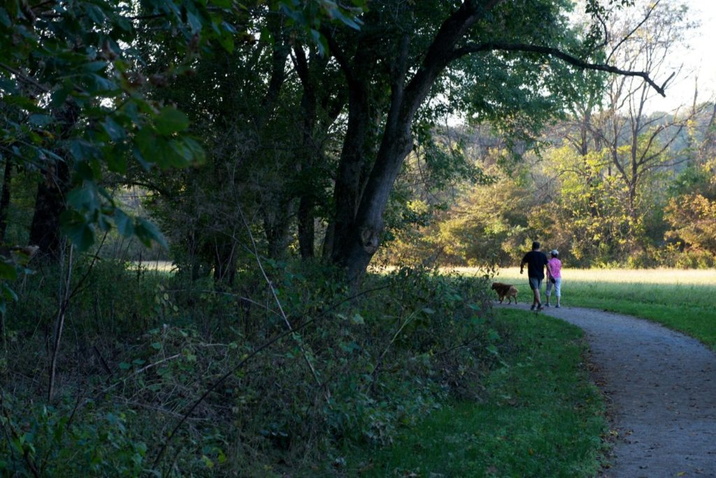 A couple walks their dog