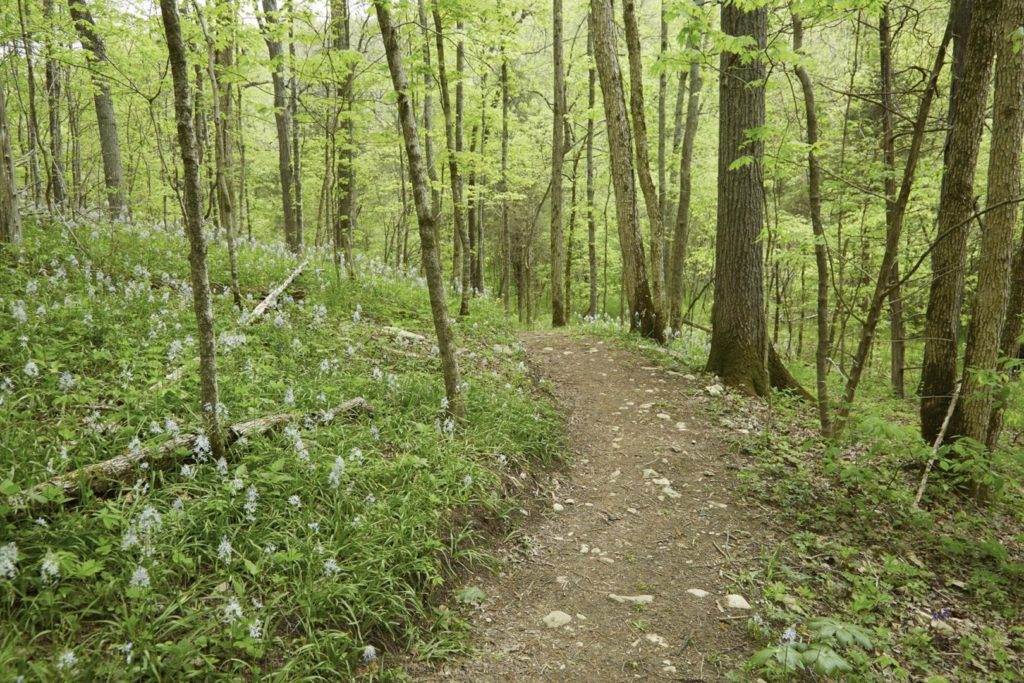 A walking trail in the woods