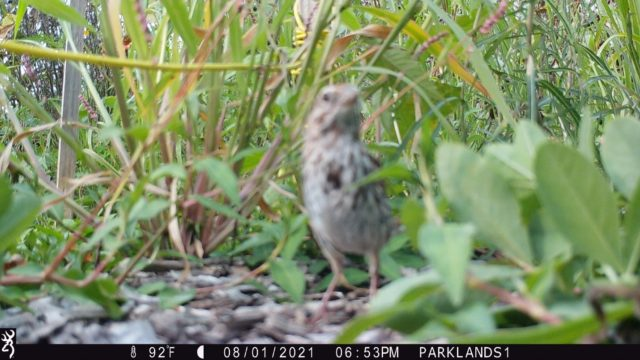 Trail Cam Bird